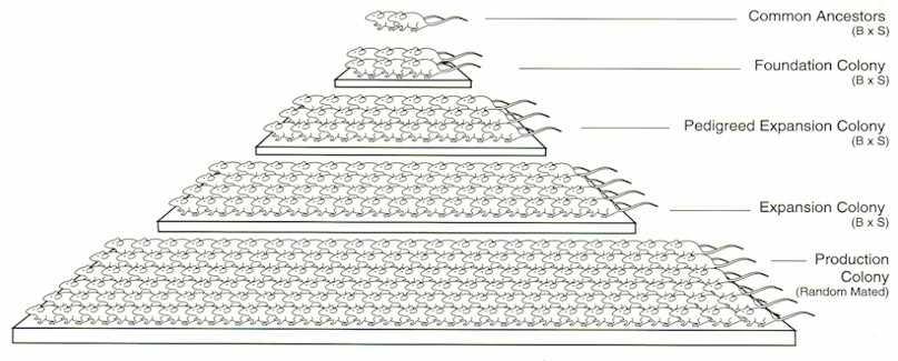 pyramid-large (edit)